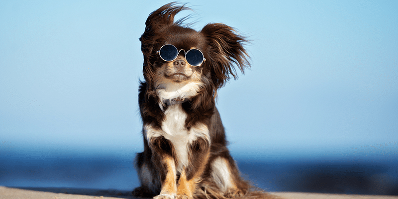 Love dogs & cats? These 5 pet startups show how to mix