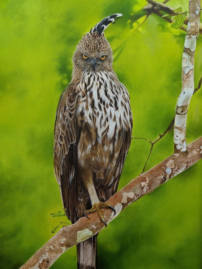 Why this former network engineer has hosted seven exhibitions on nature and wildlife