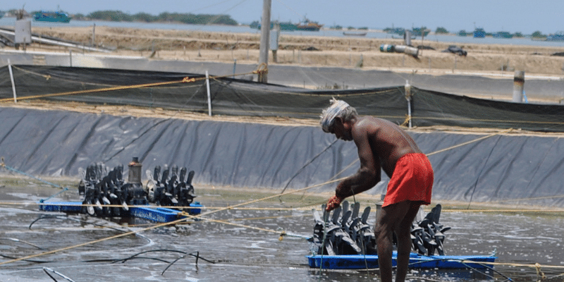 How this Chennai-based startup uses artificial intelligence to impact the lives of aqua farmers in India