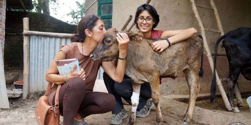 animal welfare, stray animals, peepal farm