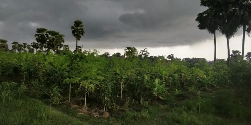 Agroforestry model