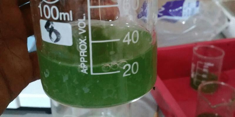 GreenBubble Algalworks