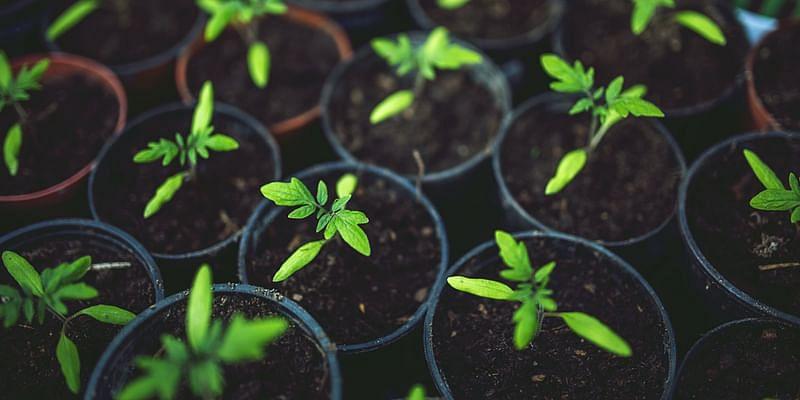 homegrown plants