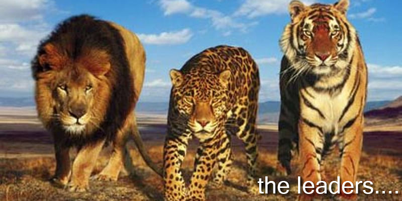 The Different Kinds Of Leaders The Lion The Tiger And The Cheetah