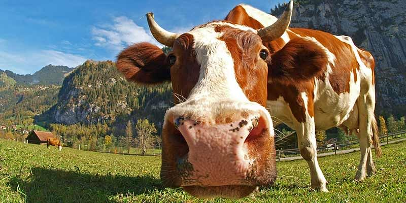 Want to buy cow dung and trains? Online marketplaces have