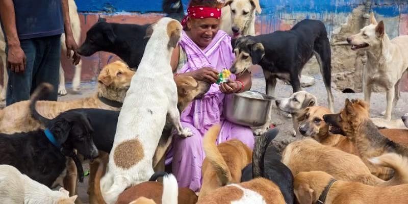 Meet Pratima Devi, a rag picker who takes care of 400 stray