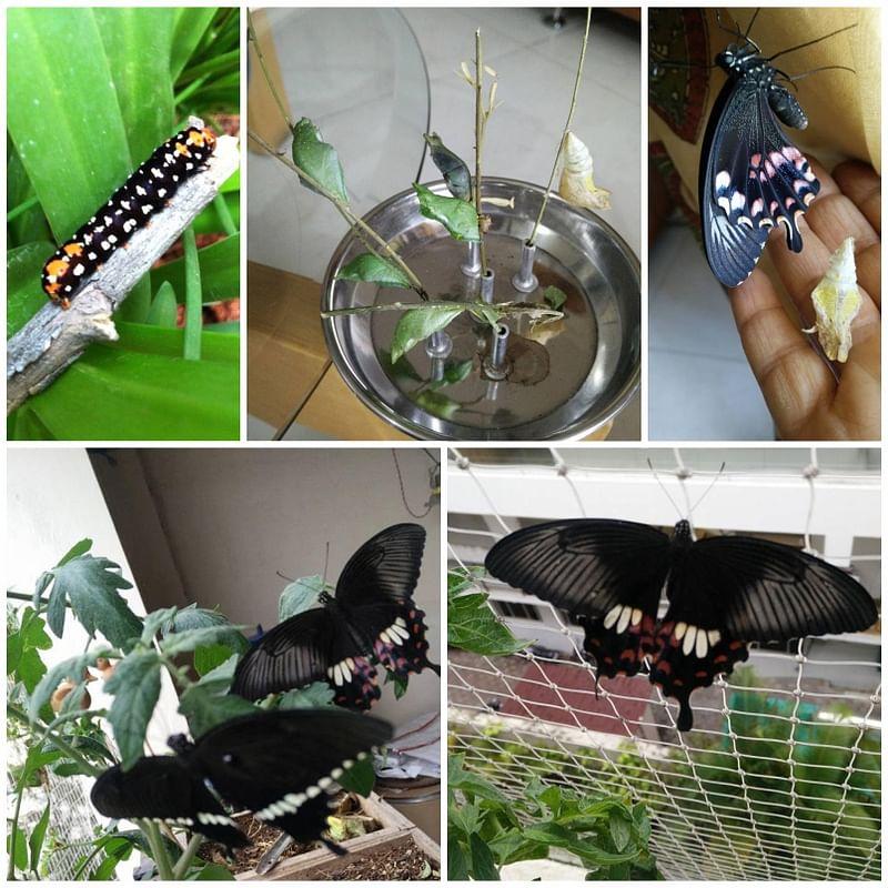 Butterflies emerge on Vani's terrace.