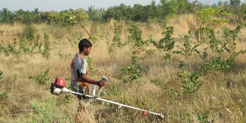 Meet the engineer who quit his job and planted over 40,000 trees in