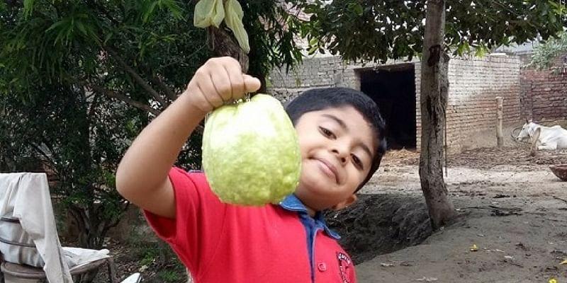 This engineer quit his job to grow jumbo guavas, sells them
