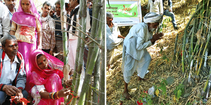 Facing govt inaction, tribal farmers in Rajasthan harvest bamboo on