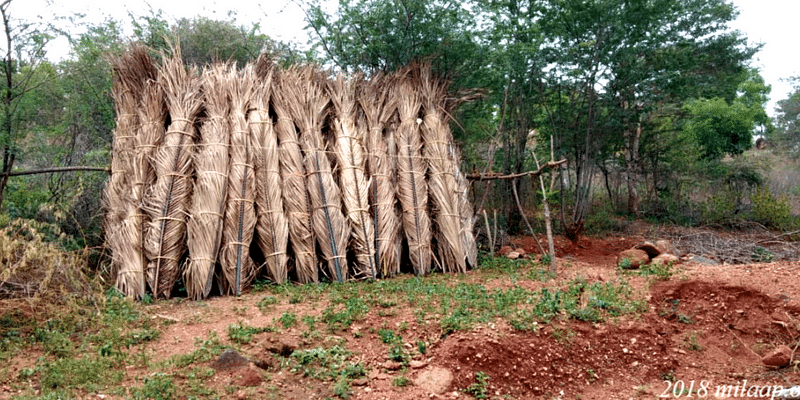 How the age-old craft of weaving coconut palms in Tamil Nadu is