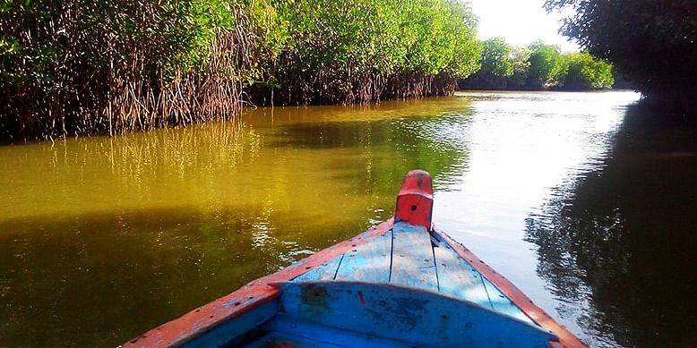 Pichavaram Mangroove Forest