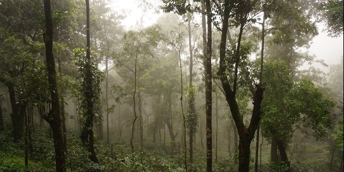 Photo #3: The beautiful landscape of Chikmagalur reflects a charming image of green peace.