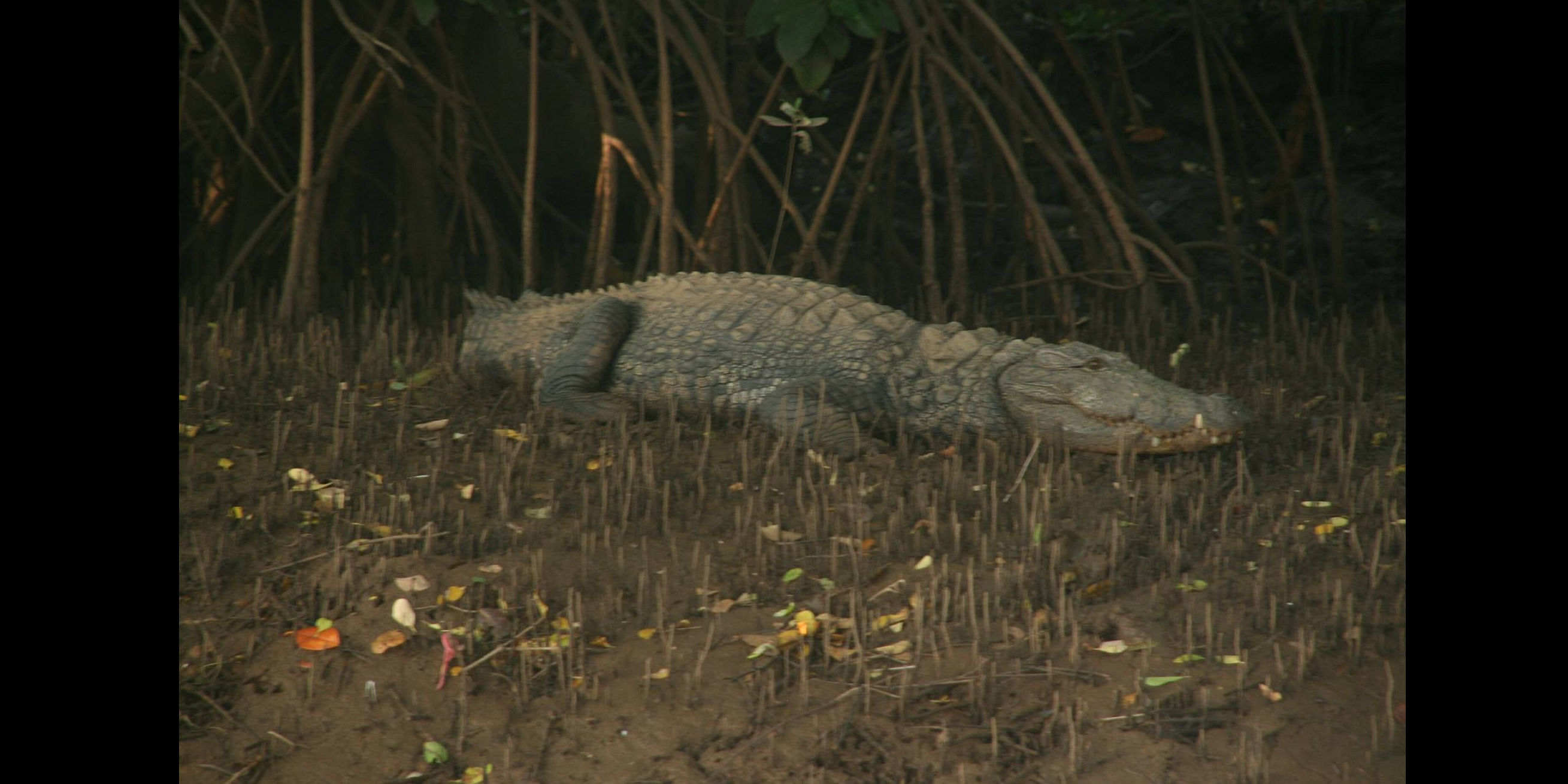 Yeah, that's a real Croc<br>
