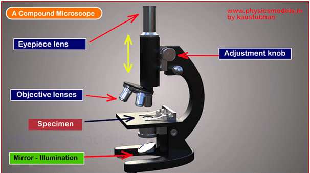 Working Principle of a Compound Microscope