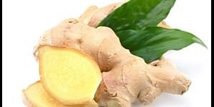 Ginger increases immunity - Engineering Aspirants Health Tips