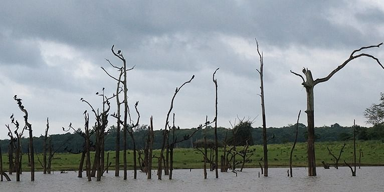 Photo #2: The birds rested on the logs that were inside the river.