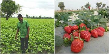Hindi | strawberry-farming