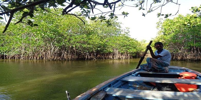 Figure 7 Pichavaram Mangrove forest