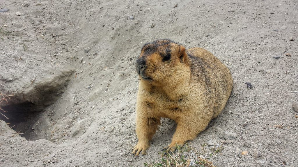 Rare Species in Ladakh