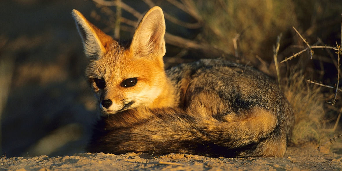 Image Source: https://lonelyplanetimages.imgix.net/a/g/hi/t/20147a7139e2ee0b0b87a74f85cda617-kgalagadi-transfrontier-park.jpg?sharp=10&vib=20&w=1200